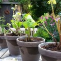 Planten & potten